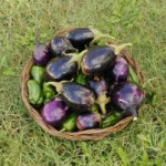 1369107_eggplants_and_peppers_2